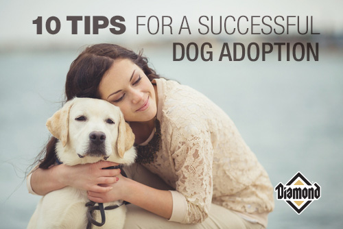10 Tips for a Successful Dog Adoption