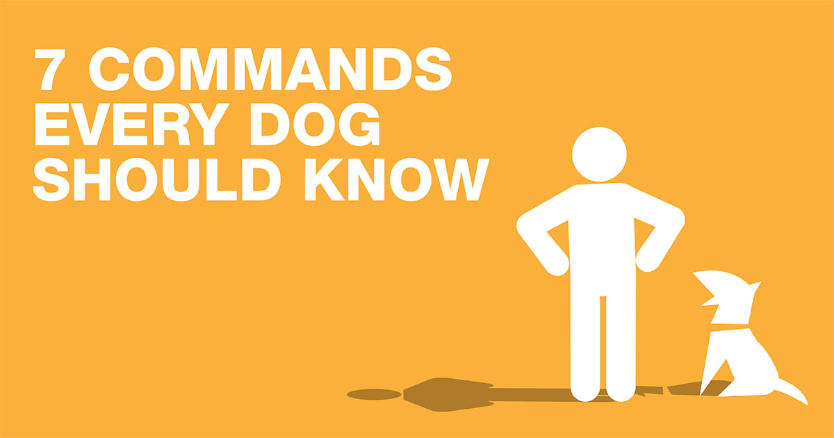 7 Commands Every Dog Should Know | A graphic of a person standing with their dog. | Diamond Pet Food