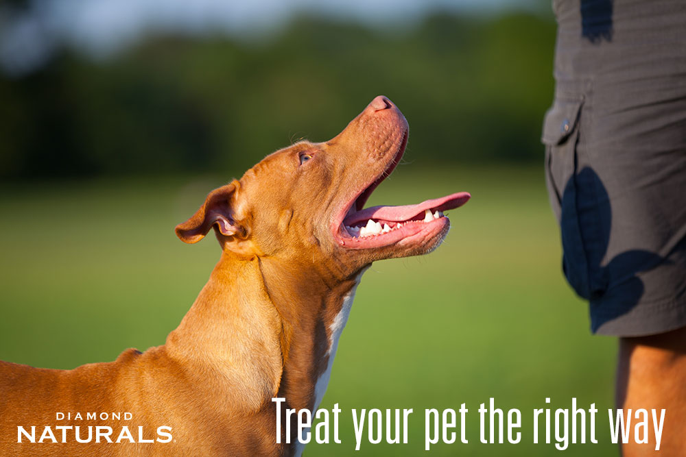 treat-pet-right