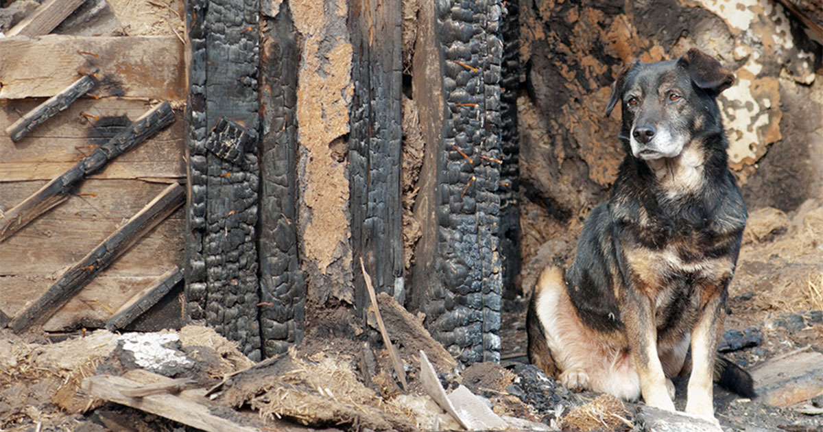 Dog Sitting Outside a Burned Structure | Diamond Pet Foods