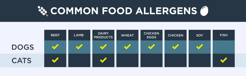 Common food allergens for pets