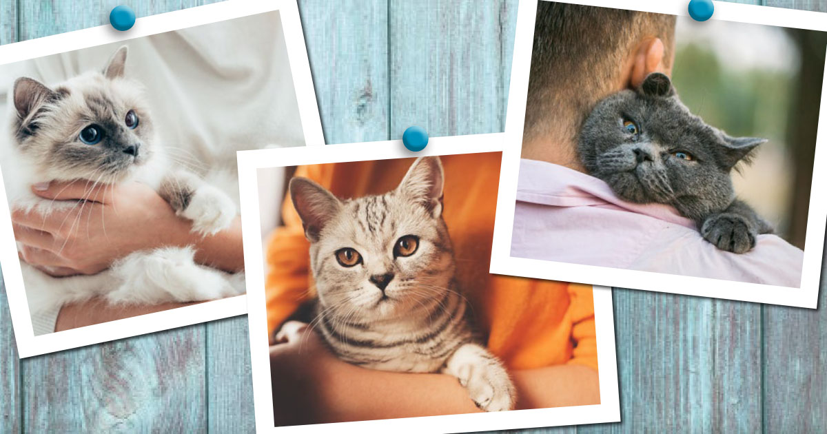 Collage of Three Domestic Cat Pictures on a Wooden Fence | Diamond Pet Foods