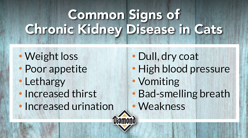 Common Signs of Chronic Kidney Disease in Cats | Diamond Pet Foods
