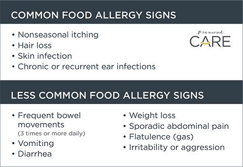 Common and Uncommon Food Allergy Signs | Diamond Pet Foods
