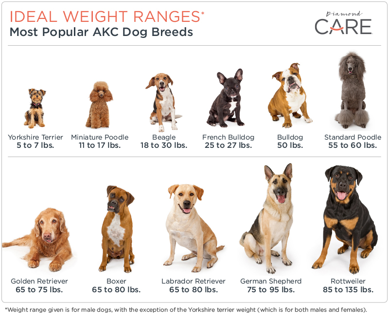 Ideal Weight Range Chart Per Dog Breed | Diamond Pet Foods
