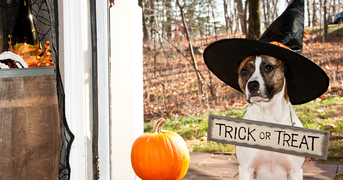 Trick? Or Treat? Why Pets Shouldn't Eat Chocolate | Diamond Pet Foods