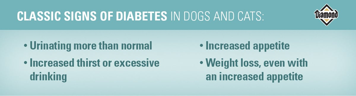 Classic Signs of Diabetes in Dogs and Cats | Diamond Pet Foods