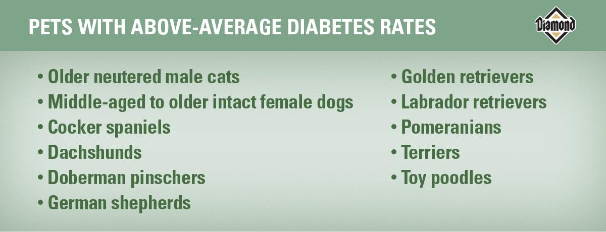 Pets with Above-Average Diabetes Rates | Diamond Pet Foods