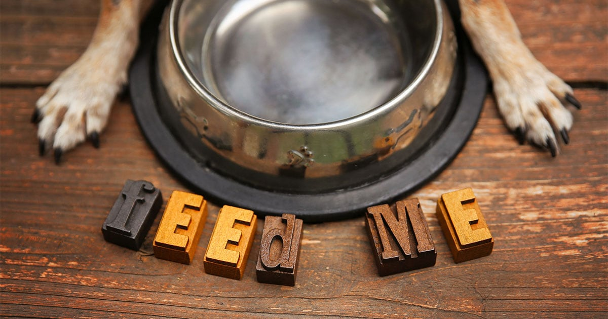 "Wooden Letters Spelling ""Feed Me"" in Front of Empty Food Bowl 
