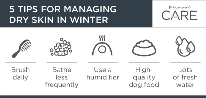 5 Tips for Managing Dry Skin in Winter Call-Out | Diamond Pet Foods