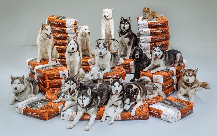 Dogs_BagShotComp