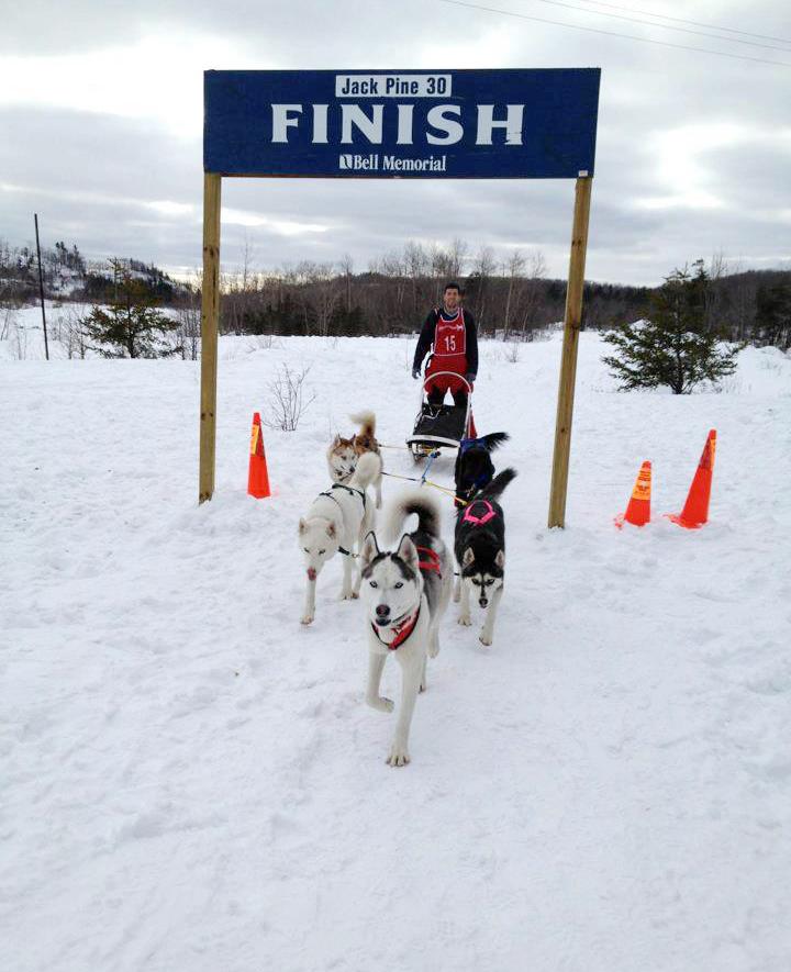 breakaway sled dogs