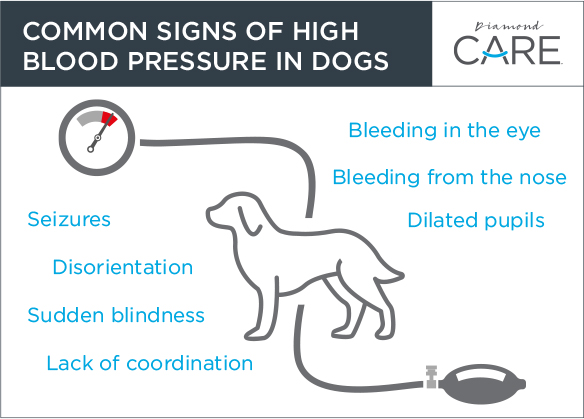high blood pressure in dogs