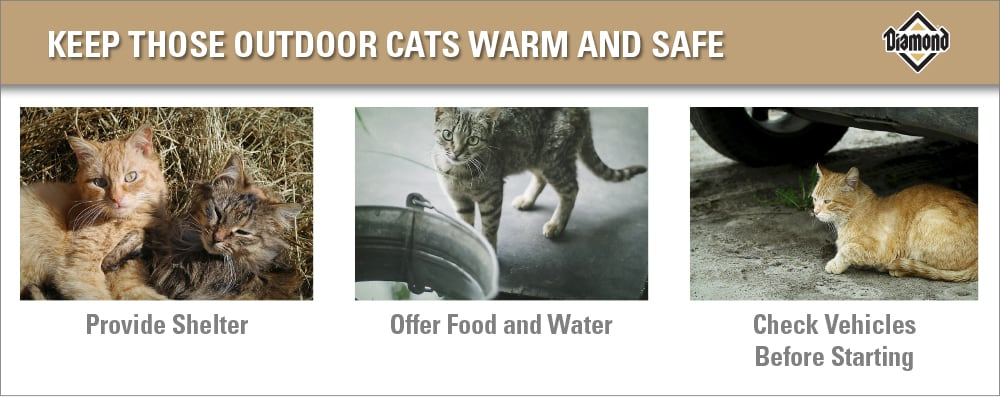 Winter Safety Tips for Outdoor Cats Chart | Diamond Pet Foods