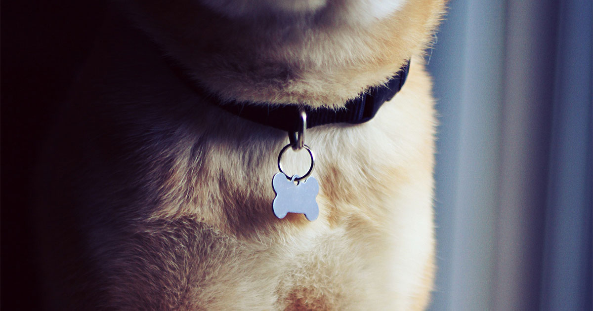 What I've Learned from Renaming My Rescue Dogs | Diamond Pet Foods