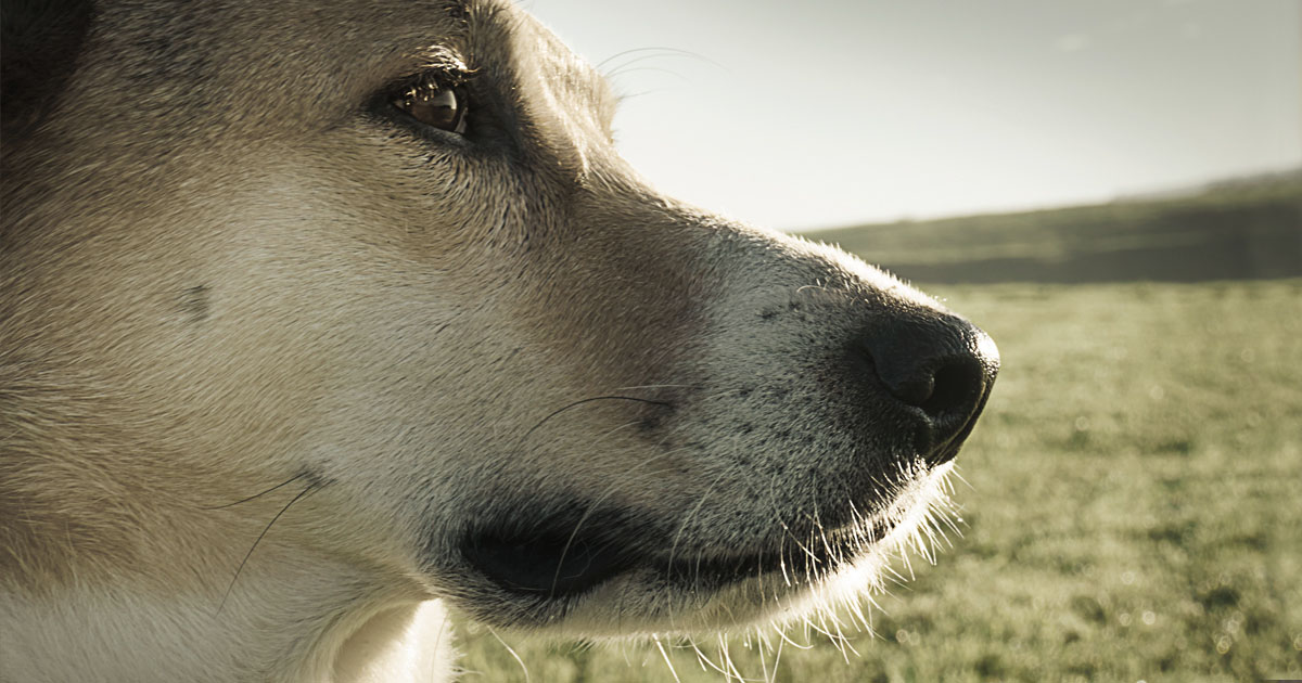Can Kidney Problems Cause Heart Damage In Dogs Diamond Pet Foods