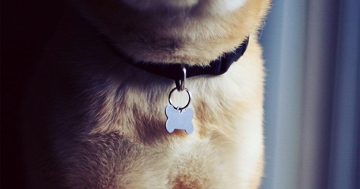 Close-Up of Pet Identification Tag on a Dog's Collar | Diamond Pet Foods