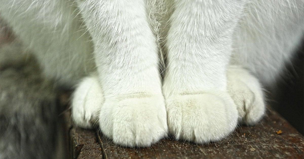 Close-Up of a Cat's Feet | Diamond Pet Foods