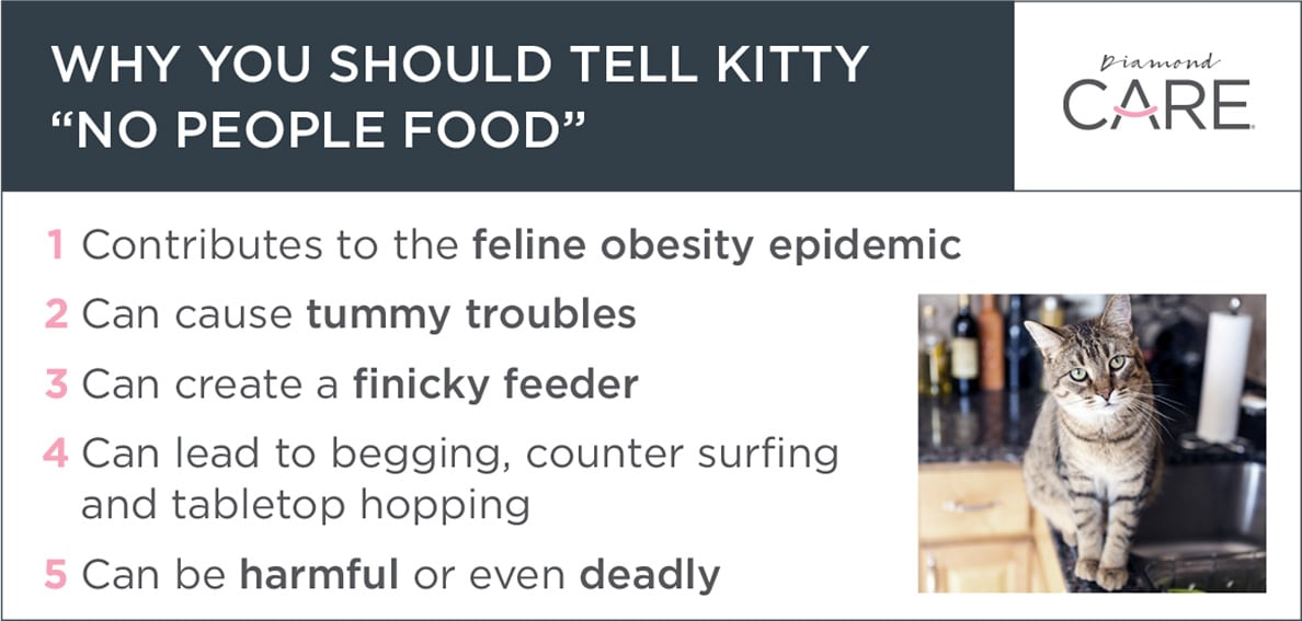 "Why You Should Tell Kitty ""No People Food"" Guide 