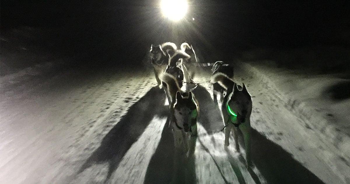 Husky Dogs Pulling a Sled at Night | Diamond Pet Foods