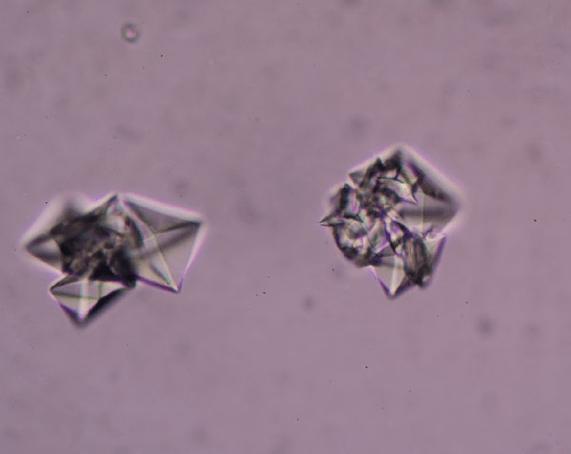 Pet Struvite Crystals   Diamond Pet Foods