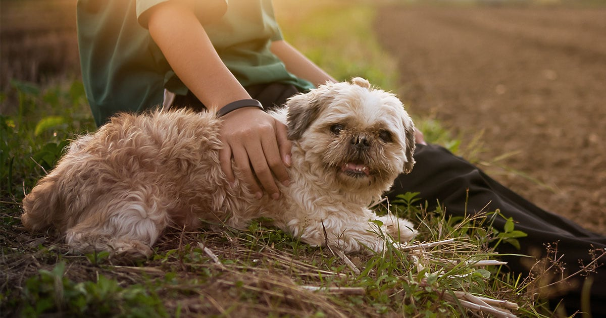 Senior Dog Resting on a Field with Owner | Diamond Pet Foods