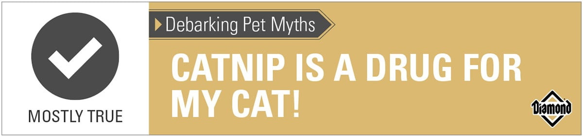 Catnip Is Like a Drug for Cats Is Mostly True Mythometer   Diamond Pet Foods