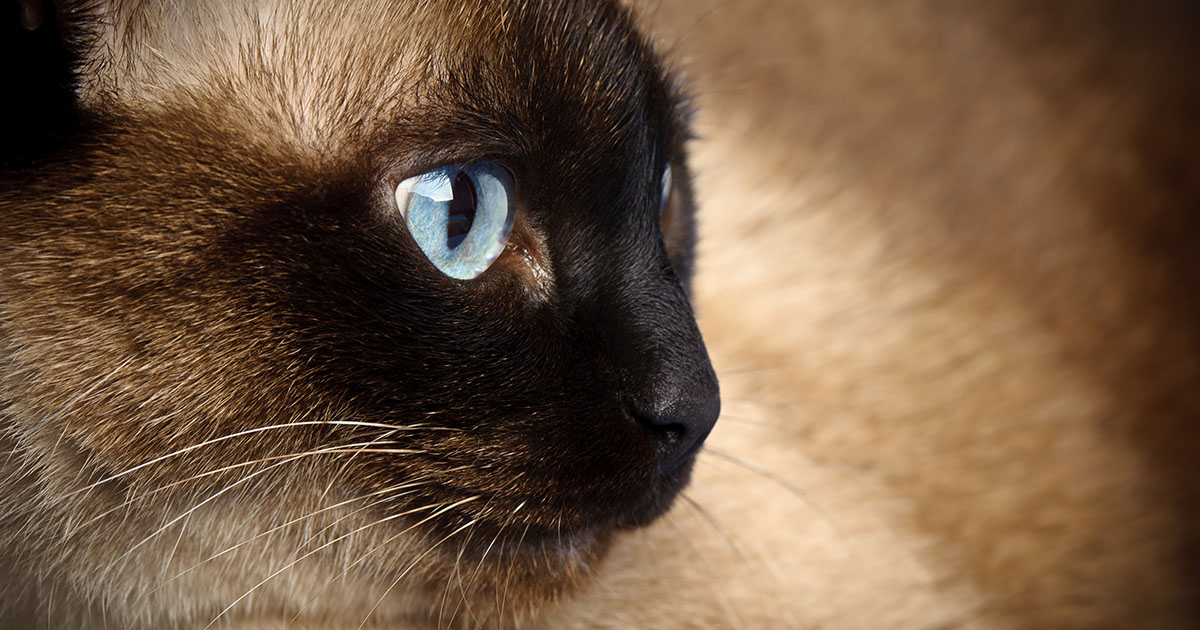 The Truth About Cats and Their Nine Lives   Diamond Pet Foods