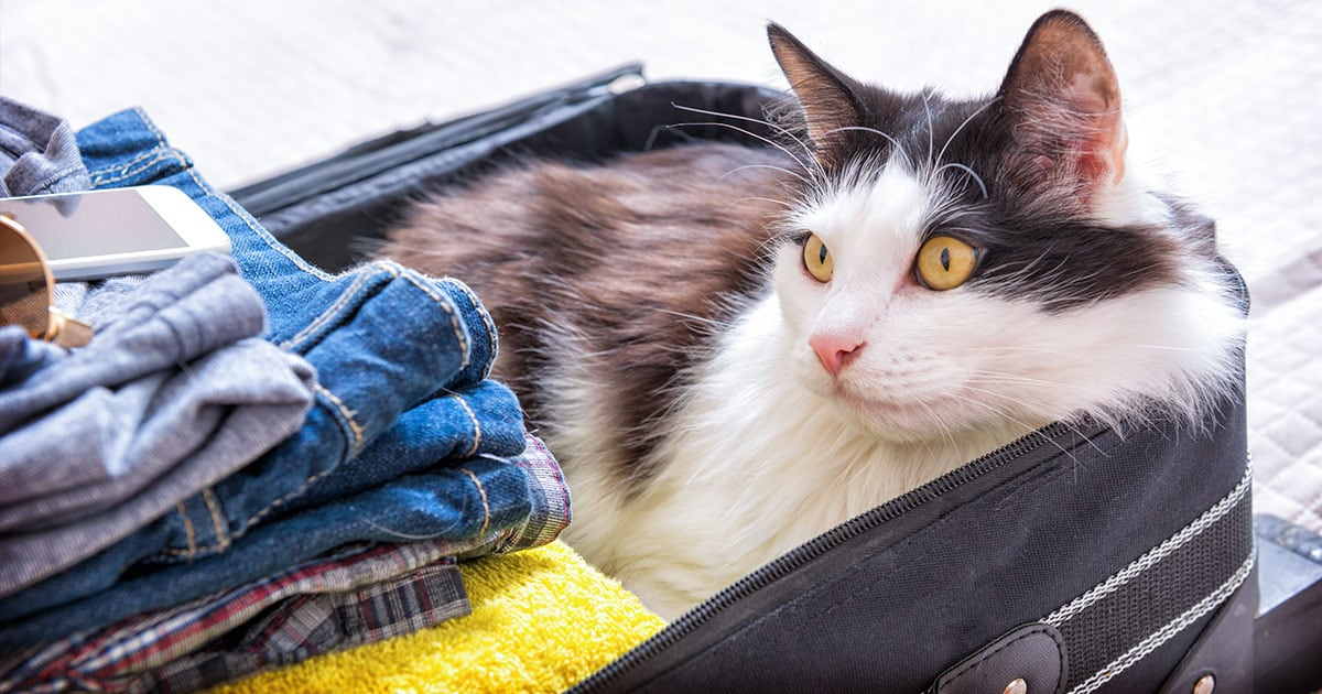 Cat Sitting Inside Luggage Bag | Diamond Pet Foods