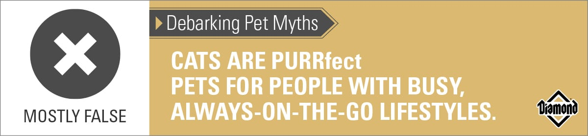 Cats Are Not Always Perfect Pets for People with Busy Lifestyles | Diamond Pet Foods