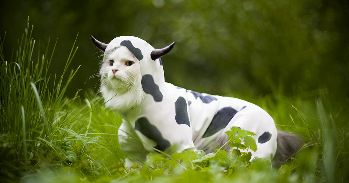 Cat Wearing a Cow Costume | Diamond Pet Foods