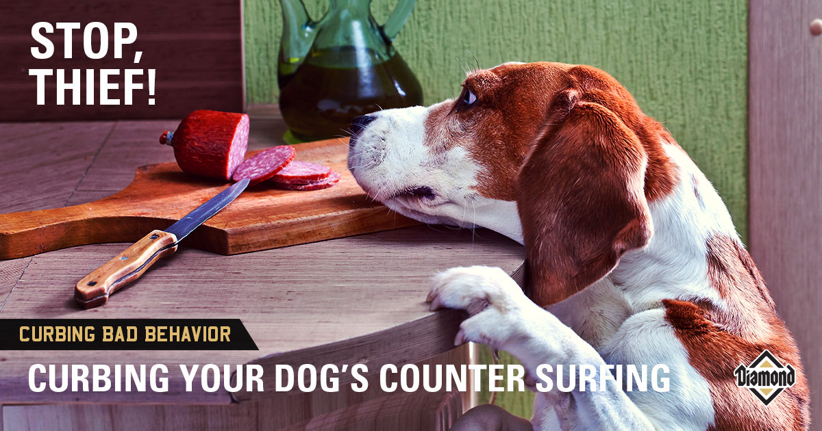 counter surfing