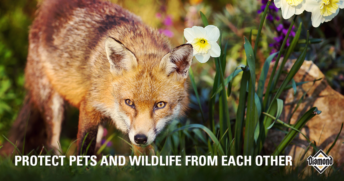 PROTECT PETS AND WILDLIFE FROM EACH OTHER