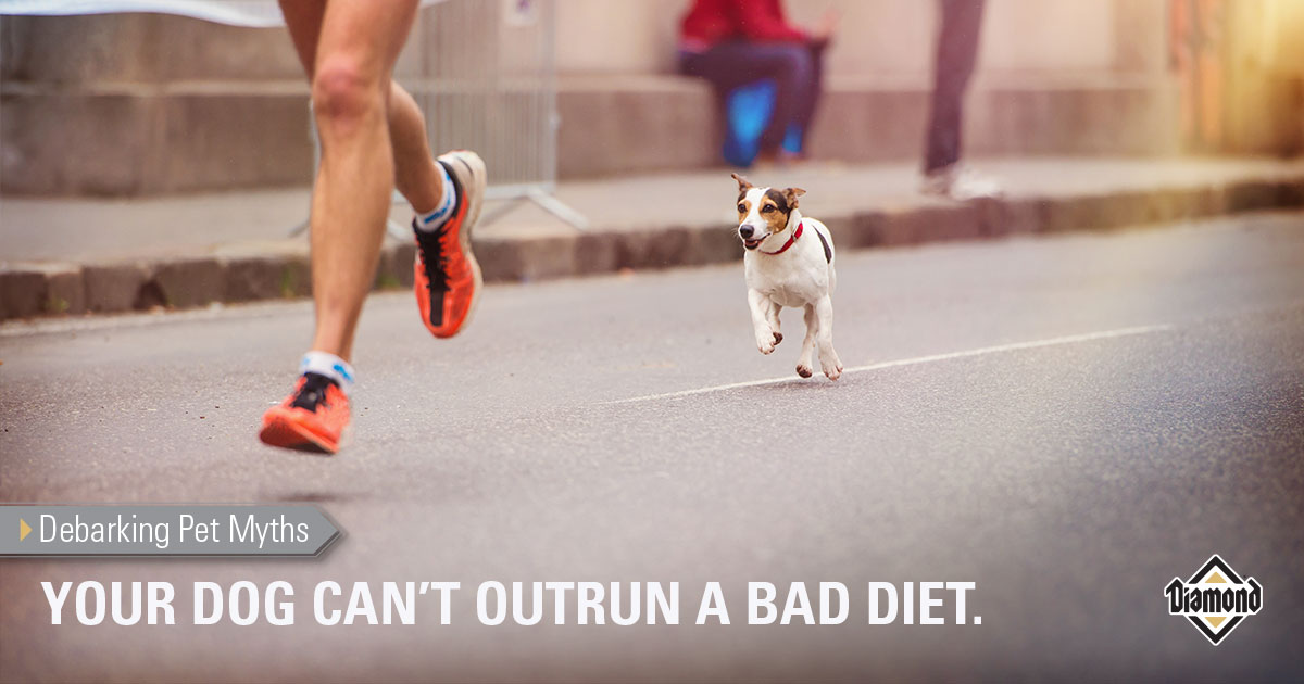 YOUR DOG CAN'T OUTRUN A BAD DIET.