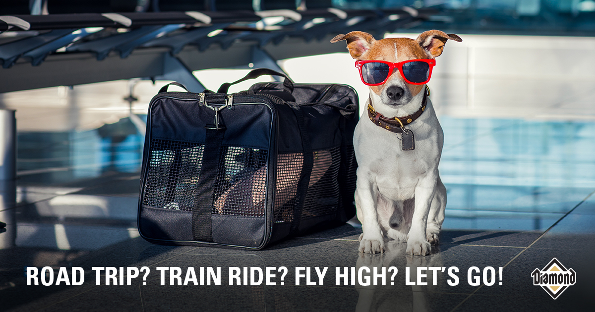 ROAD TRIP? TRAIN RIDE? FLY HIGH? LET'S GO!