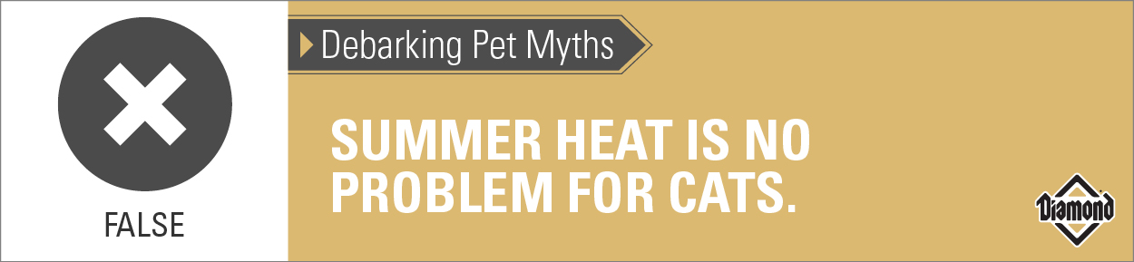 Debarking Pet Myths: Summer heat is no problem for cats