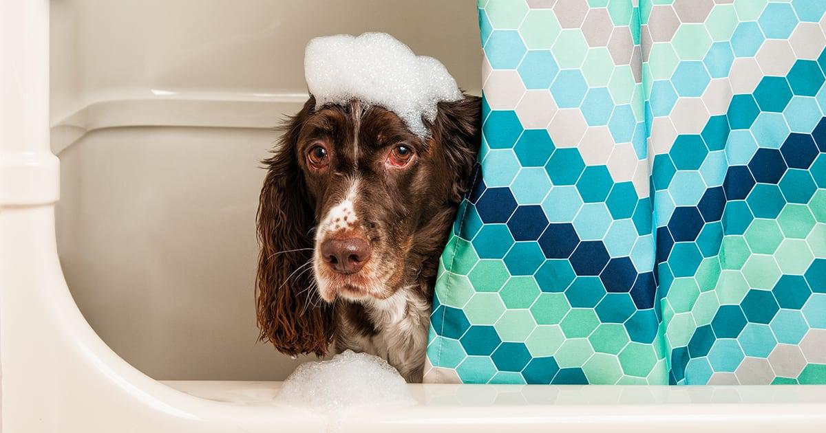 Dog Getting a Bath in Tub | Diamond Pet Foods