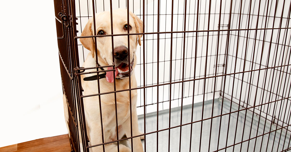 9 Tips For Crate Training A Rescue Dog Diamond Pet Foods