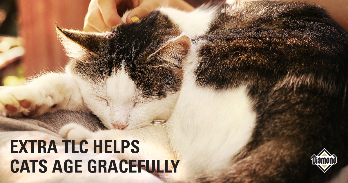 Extra TLC Helps Cats Age Gracefully