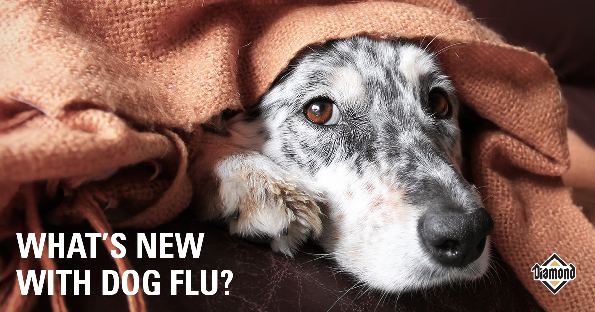 What's With New Dog Flu? | Diamond
