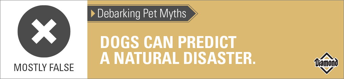 Mostly False | Dogs Can Predict a Natural Disaster