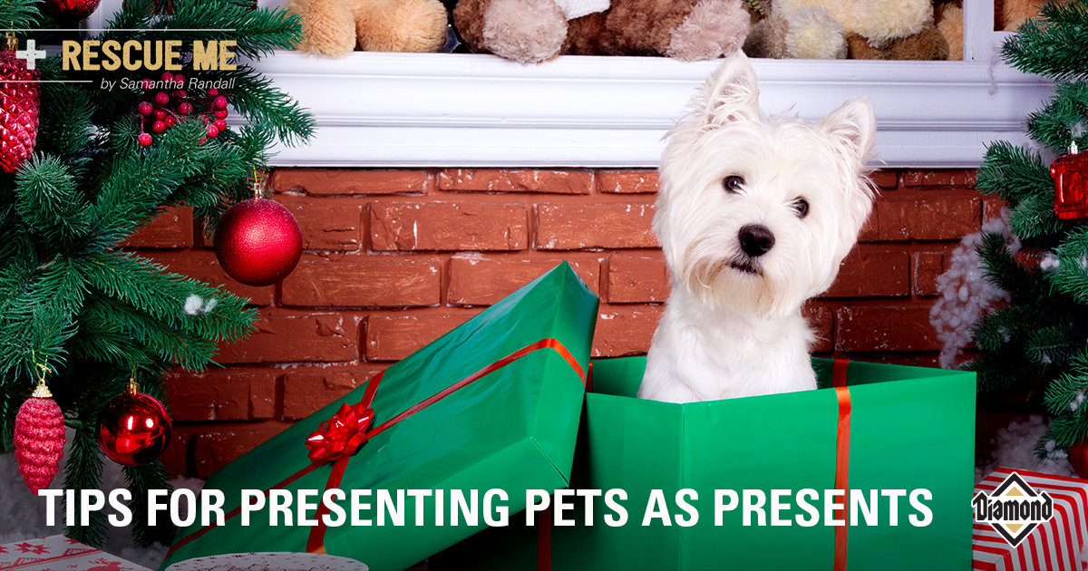 Tips for Presenting Pets as Presents