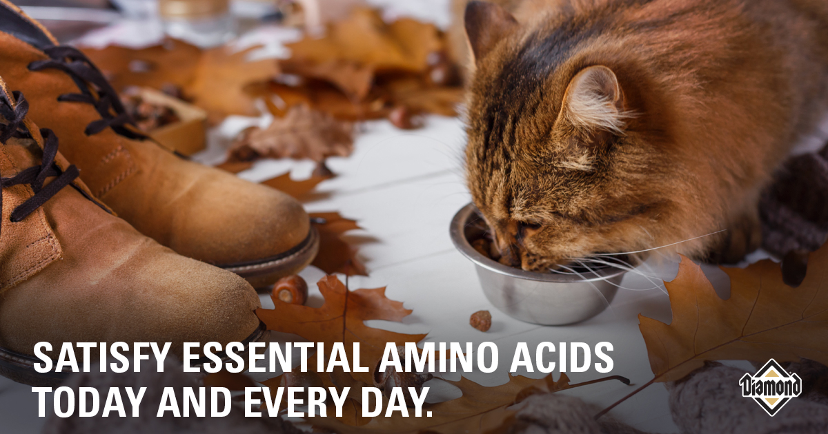 Satisfy Essential Amino Acids Today and Every Day. | Diamond Pet Foods