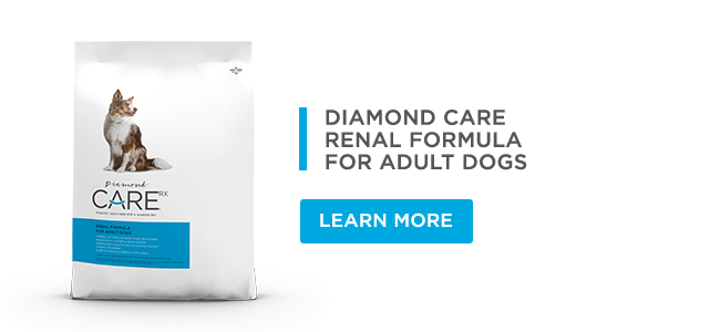 Renal Formula for Adult Dogs