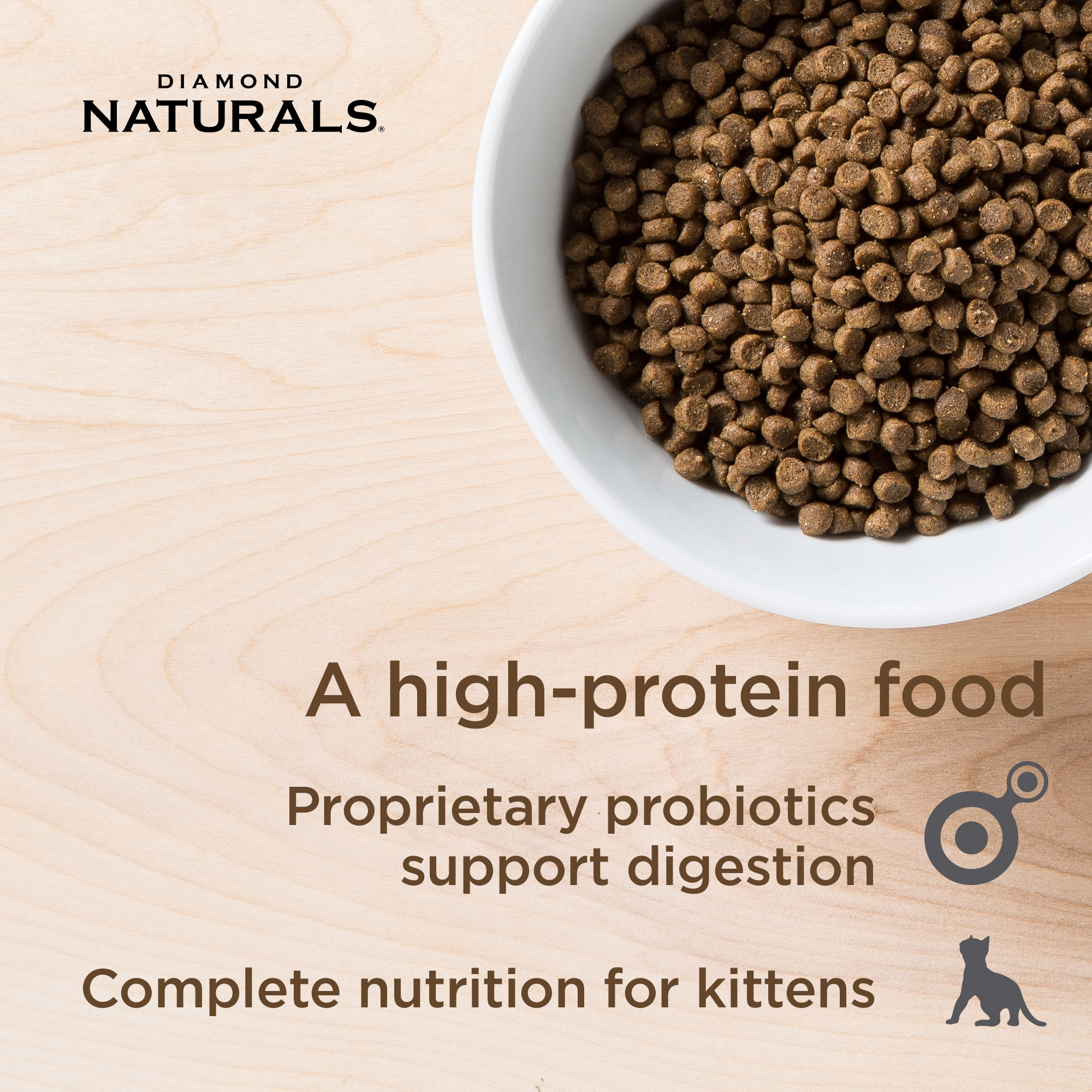 nutrition for kittens