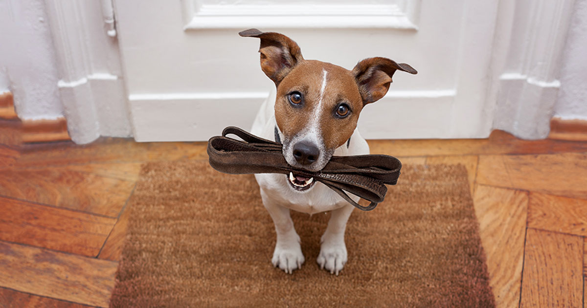 Dog Holding Leash in Their Mouth | Diamond Pet Foods