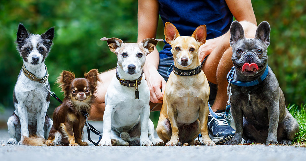 Group of Dogs with Owner and Leash Ready to Go for a Walk | Diamond Pet Foods