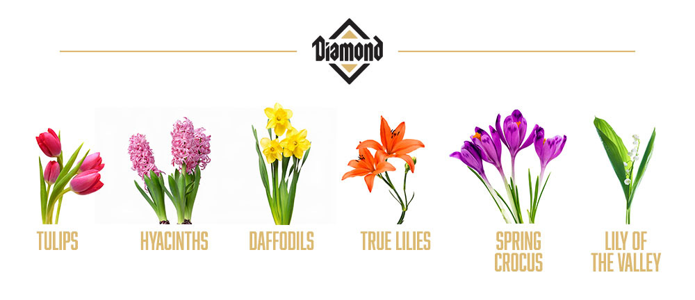 Dangerous Plants for Pets | Diamond Pet Food