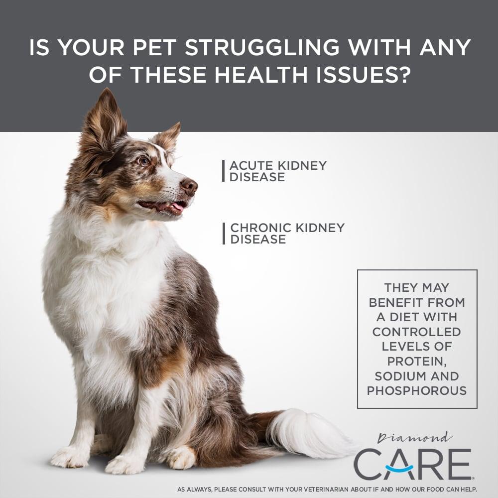 Dog sitting Diamond CARE Renal Formula | Diamond Pet Foods