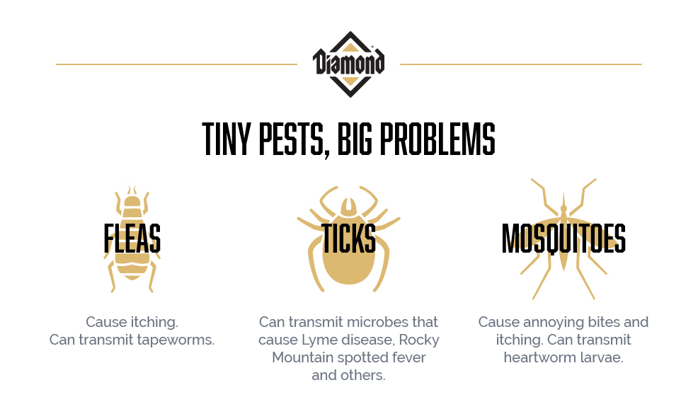 Tiny Pests Like Fleas Ticks and Mosquitoes Can Cause Big Problems for Pets | Diamond Pet Food